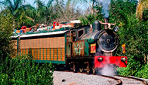 Wildlife Express Train